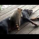 Un raton si un caine – cei mai buni prieteni!